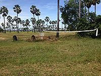 草の生えたバレーコート